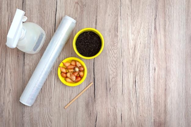 집에서 파를 심고 재배하기위한 액세서리. 작은 샬롯, 흙, 세라믹 냄비, 물이 담긴 스프레이 병, 지침을위한 복사 공간이있는 테이블에 투명한 플라스틱 랩.