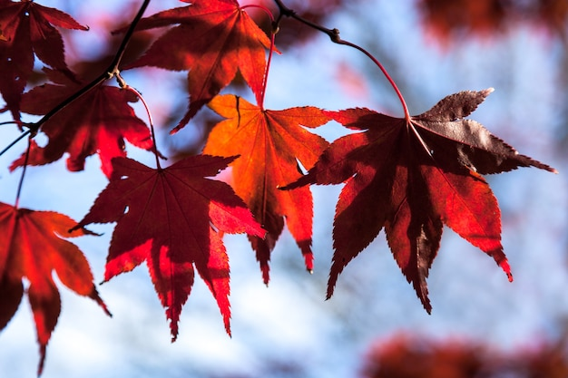가을에 단풍