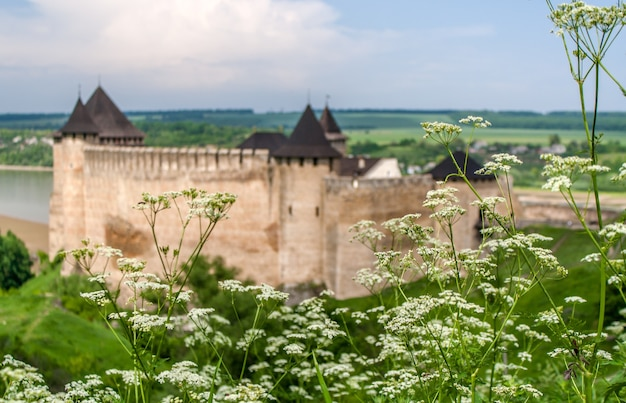 Achillea millefolium (yarrow) against the background of khotyn castle and dniester river