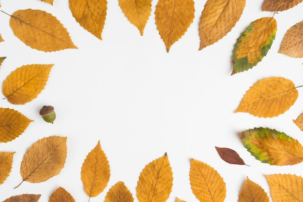 Acorn inside leaf border