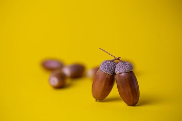 Acorns close up isolated on yellow background