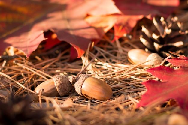 Желуди, шишки и кленовые листья на хвое в лесу осенью