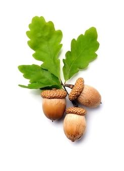 白い背景で隔離の葉とどんぐりナッツ。