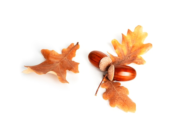 Acorns and oak leaves are isolated on a white background. high quality photo