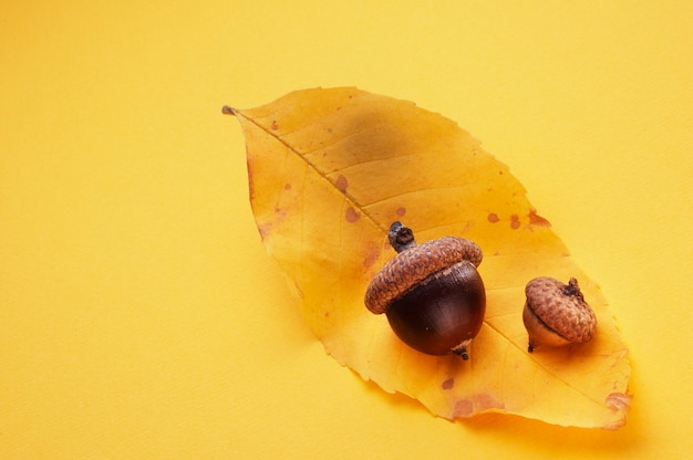 黄色の葉のどんぐり