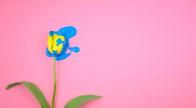 Акриловый синий цвет, капающий на плоский желтый тюльпан, лежал на прозрачном розовом фоне.