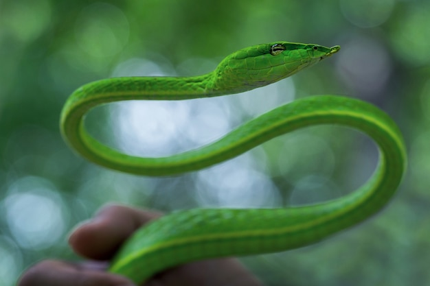 The action of snake  in the natural atmosphere.