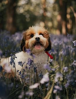 Активный резвый маленький питомец играет в танцах на траве. улыбающийся милый джек рассел терьер в динамичной позе в движении.