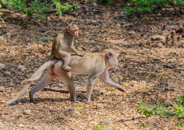 The activities of the little monkeys on a sunny day