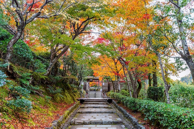 Храм адашиноненбуцудзи осенью, киото в японии.