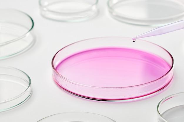 Добавление синей жидкой среды в чашку петри с помощью пипетки. химическая или биохимическая лаборатория. тестирование вакцины против коронавируса. исследования на чашках с агаром.