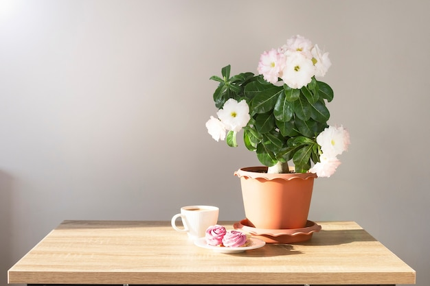 Adenium plant in a pot and cup of coffee with sweets on a table with sunlight