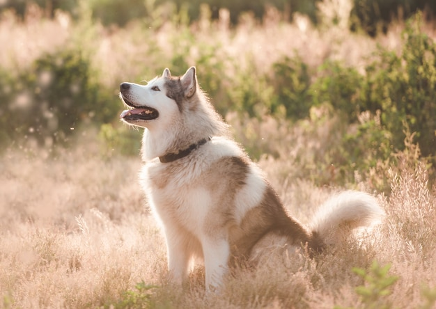 Adoarble dog sitting on summer meadow