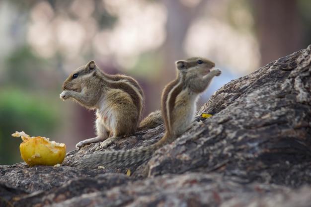 木の幹に座っている愛らしいとかわいいリス