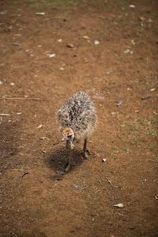Очаровательный ребенок страуса