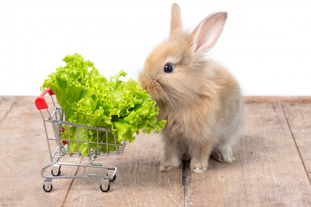 Adorable baby rabbit eating  organic lettuce in shopping cart on wooden table.