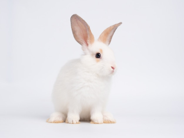 Adorable baby white rabbit sitting on white wall.