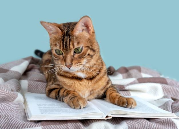 愛らしいベンガル猫がターコイズブルーの表面で本を注意深く読む