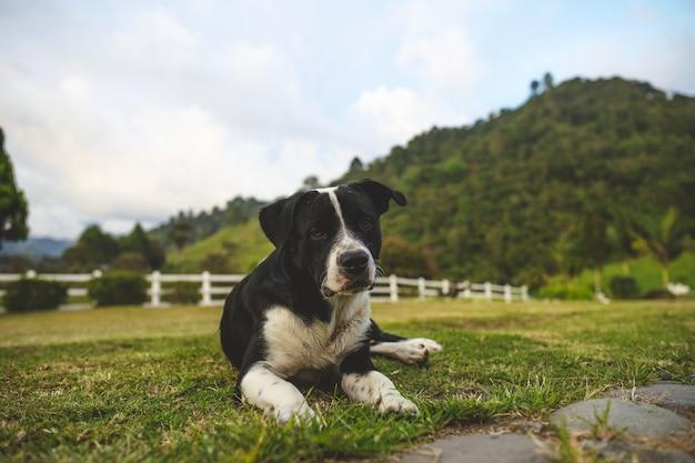 芝生の上に座っている愛らしい黒と白の犬