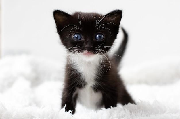 Очаровательный черно-белый котенок