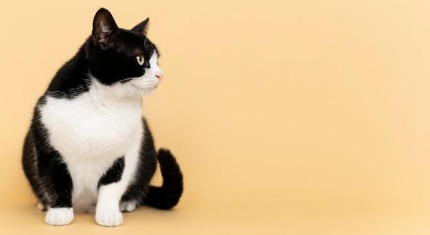 그녀의 뒤에 단색 벽과 사랑스러운 흑백 키티