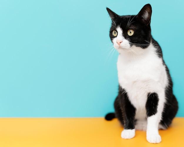 Очаровательная черно-белая кошечка с монохромной стеной позади нее