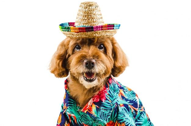 An adorable black poodle dog wearing hawaiian shirt and hat