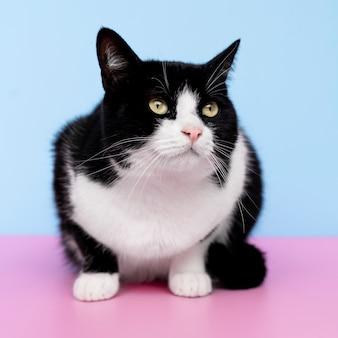 Adorabile gattino bianco e nero con parete monocromatica dietro di lei