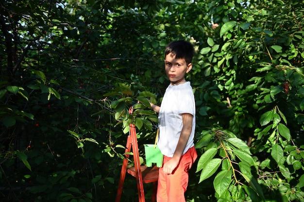 양동이를 들고 나무에 있는 사랑스러운 소년은 정원에서 갓 딴 맛있는 체리를 모으고 먹습니다. 아름다운 햇빛이 그의 얼굴에 떨어진다