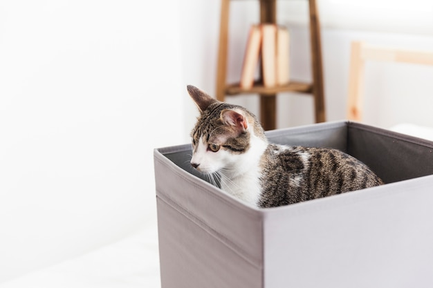 Adorable cat in box