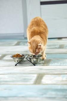 Очаровательная кошка пьет воду в металлической миске возле сухого корма в помещении дома