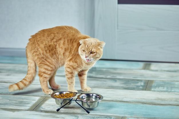Очаровательная кошка ест сухой хрустящий корм в металлической миске возле дома дома