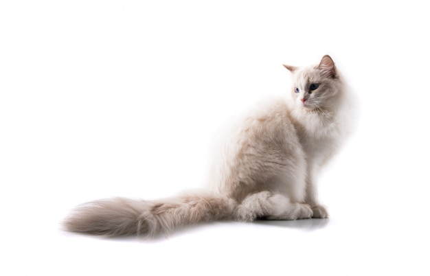 Adorable cat on isolated white background