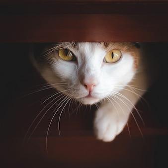フォーニチャーから覗く愛らしい猫