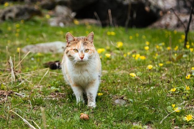 Очаровательная кошка стоит на траве, полной крошечных желтых цветов и смотрит на кого-то