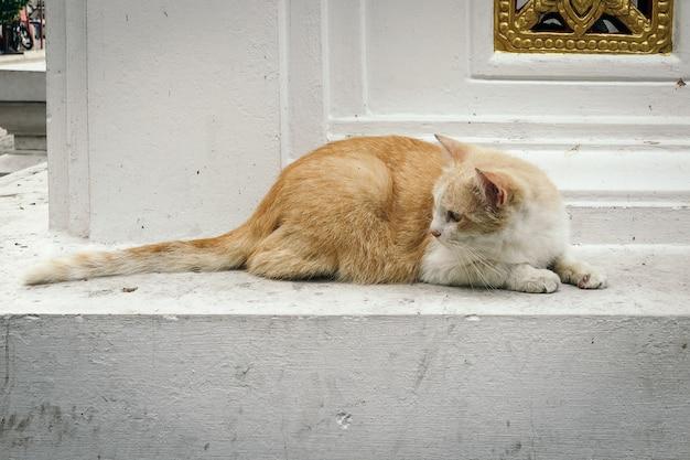Un adorabile gatto