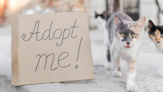 Adorable cats outdoors with adopt me sign