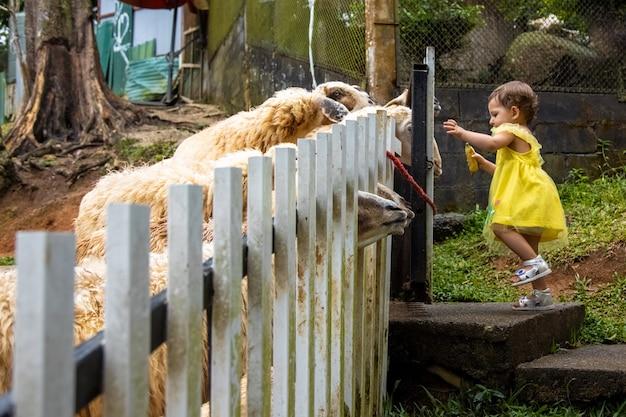 사랑스러운 귀여운 어린 소녀가 어린이 농장에서 작은 양에게 먹이를 줍니다. 동물원에서 동물을 쓰다듬는 아름다운 아기 아이. 가족 주말에 신나고 행복한 소녀.