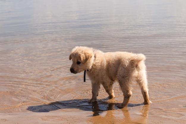 해변의 해안에 사랑스러운 더러운 강아지.