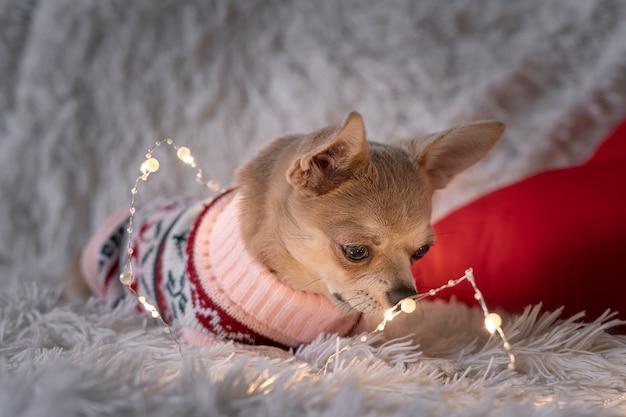 毛布の上のセーターの愛らしい犬