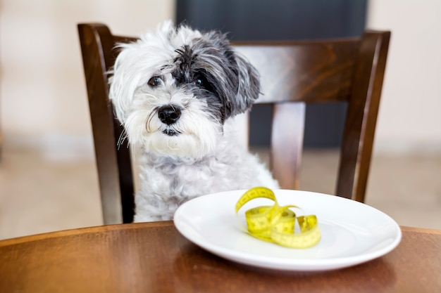 Adorable dog next to a plate with a measuring tape