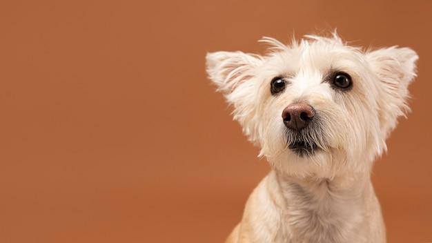 スタジオでの愛らしい犬の肖像画