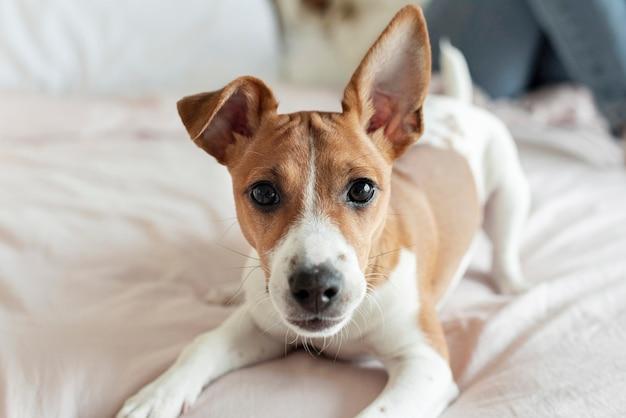 Очаровательная собака позирует на кровати