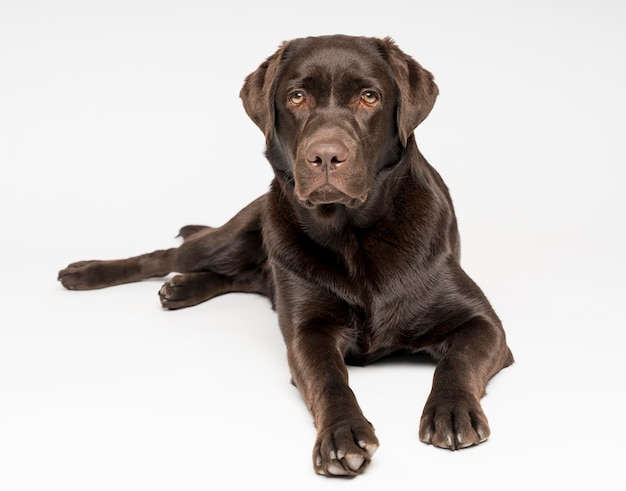 Adorable dog posing with white background