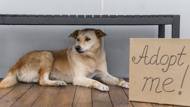 Adorable dog at shelter sitting next to adopt me sign