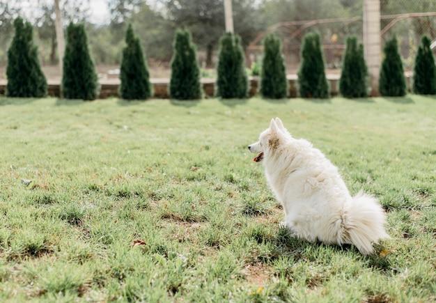 飼い主を待っている愛らしい犬