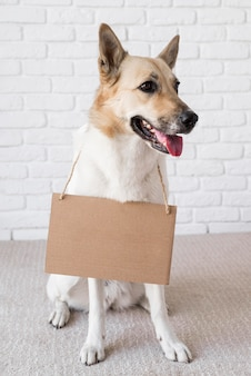 Очаровательная собака носить картонный баннер