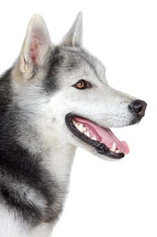 A adorable dog over white background