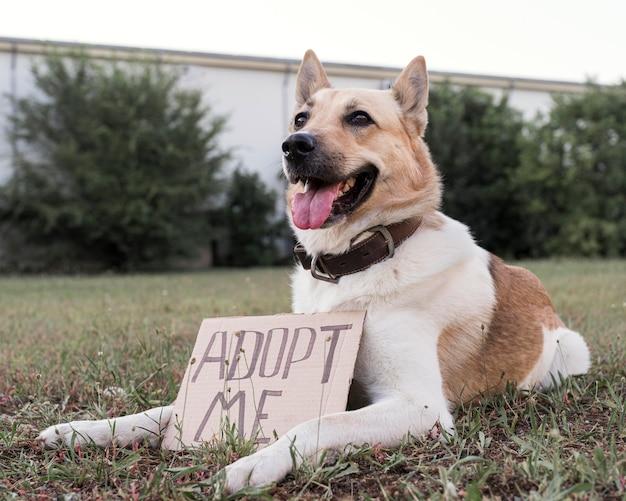 私を採用するバナー付きの愛らしい犬