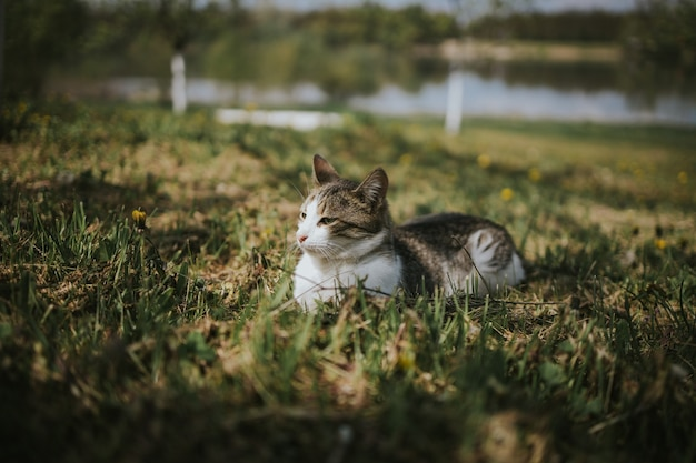 Adorable domestic cat in a field of grass and flowers